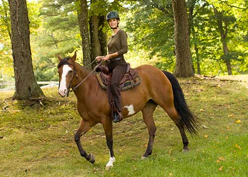 On the Trail: Horse Breeds