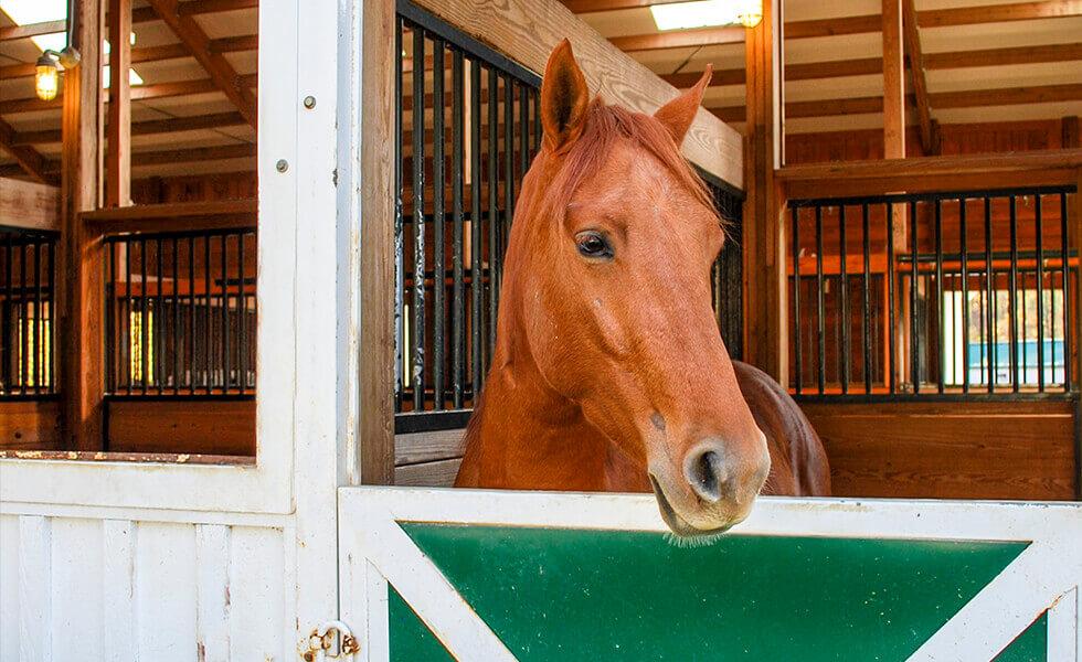 Amenities-equestrian-horse boarding